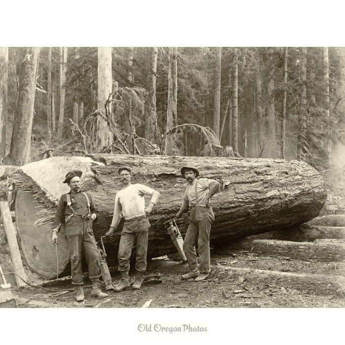 jack screw men yarding a large log c 1898 jack screw men yarding a large log c 1898